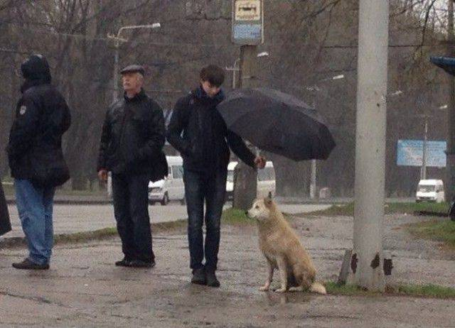 Meanwhile in Russia.... (20 pics)