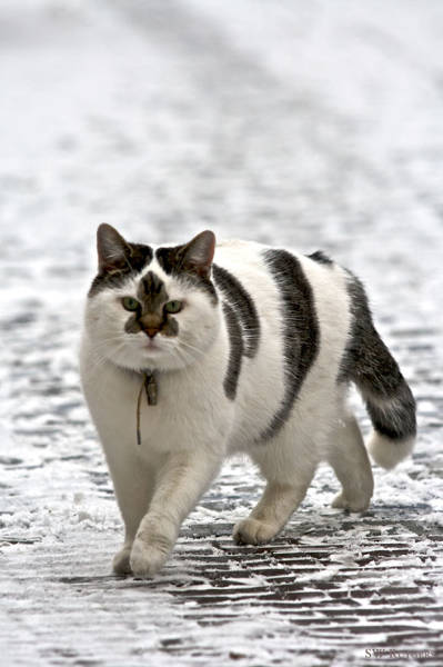 19 фото котов необычной окраски